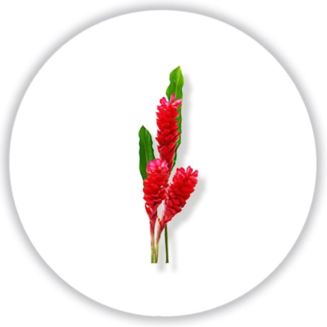Цветок имбиря Paco Rabanne Olympea Фото